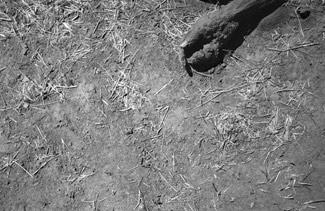 corpo por enterrar.. em Jijira Adi Abbe, Darfur-Sudão