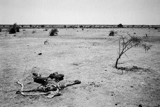 Os mais desprotegidos ficam no deserto.. e servem de alimento a outros!